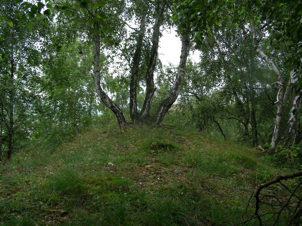 Pionierwälder auf Gips (Foto: Girwert)